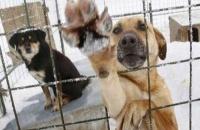 Μηδενική συμμετοχή των δήμων στο πρόγραμμα για τα αδέσποτα ζώα
